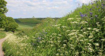 Hedgerow near Aston Crews in May